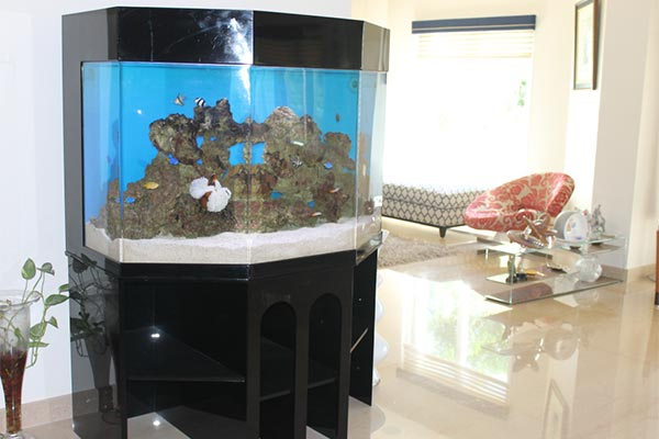 acrylic-fish-tank-002