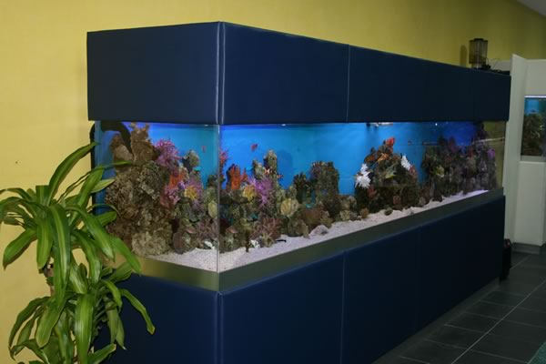 acrylic-fish-tank-026