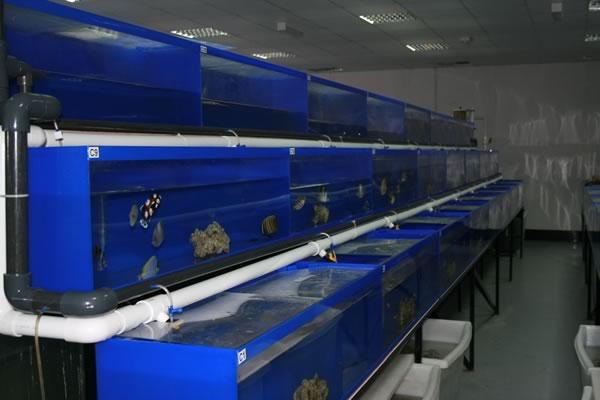 acrylic-fish-tank-029