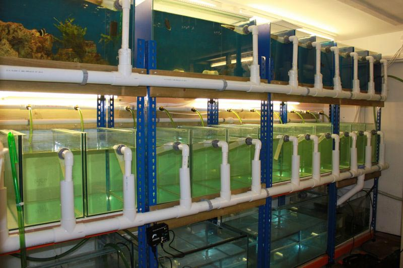 Aquarium Life Support Systems