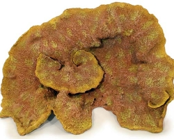 nep147-specimen-coral-aquarium-decoration-1