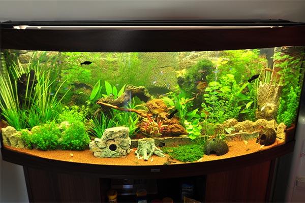 acrylic-fish-tank-007