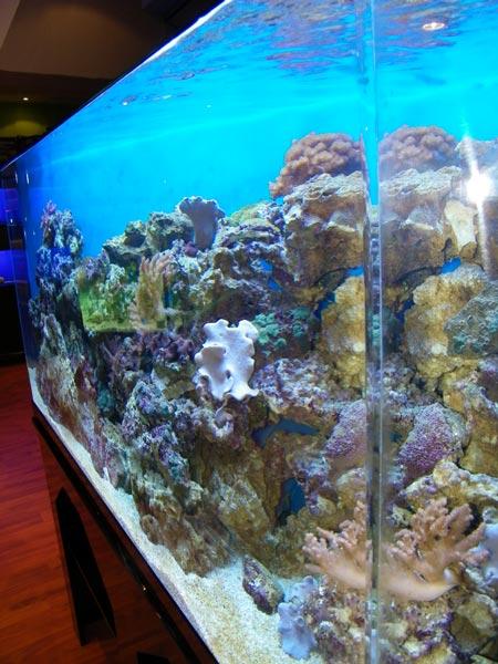 acrylic-fish-tank-014